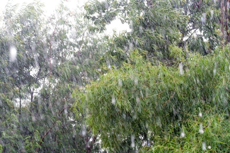在树背景的抽象雨 库存照片