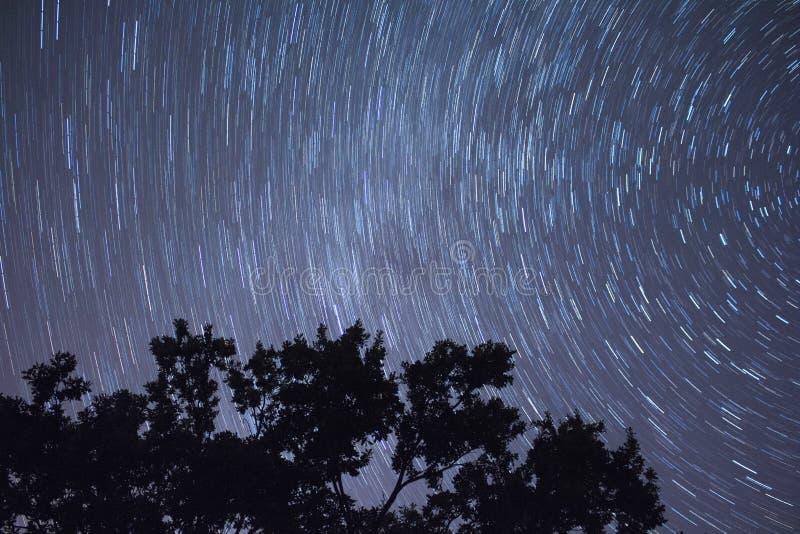 在树背景的Startrails 库存图片