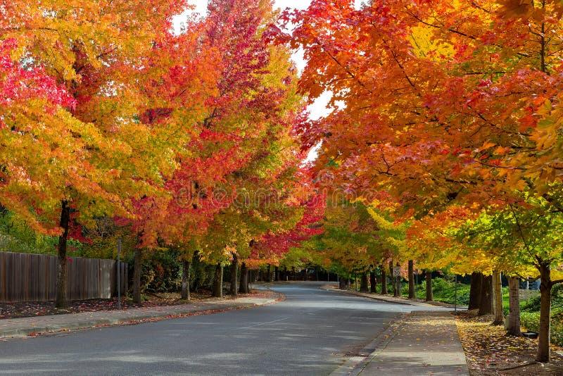 在树被排行的美国郊区邻里街道上的秋叶 库存照片