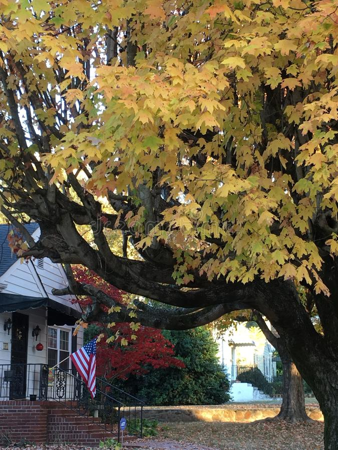在树被排行的街道上的美国房子 库存图片