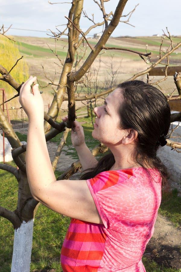 在树附近的少妇 免版税库存照片