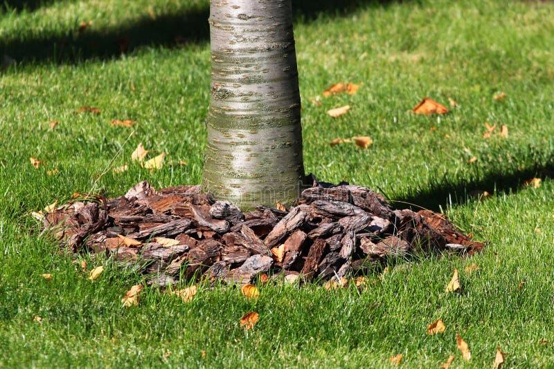 在树附近的腐土吠声 库存图片
