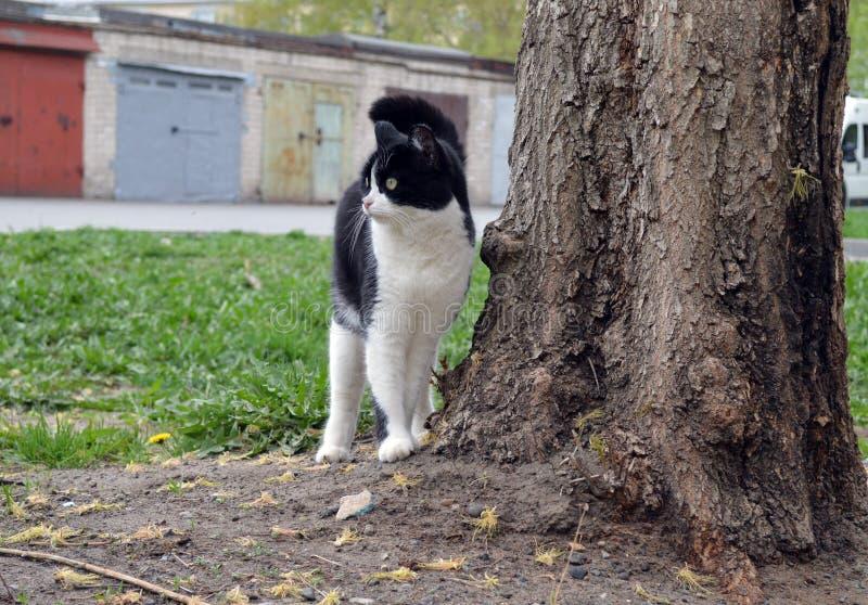在树附近的黑白猫 免版税库存图片