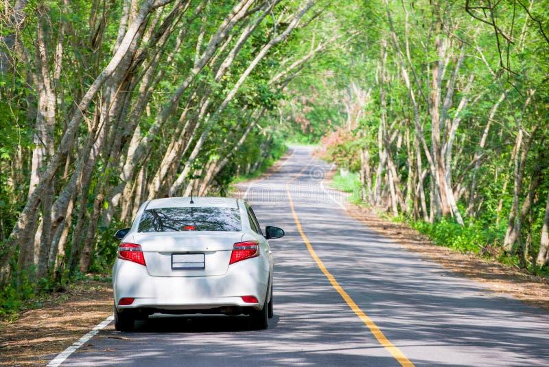 在树隧道的白色汽车 免版税图库摄影