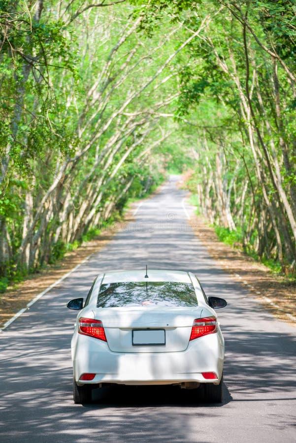 在树隧道的白色汽车 库存图片
