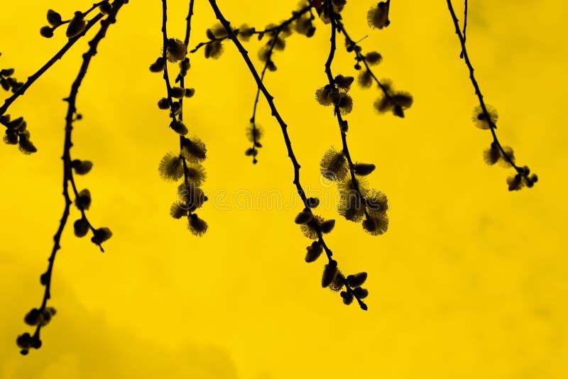 在树,剪影,黄色背景的花 免版税库存图片
