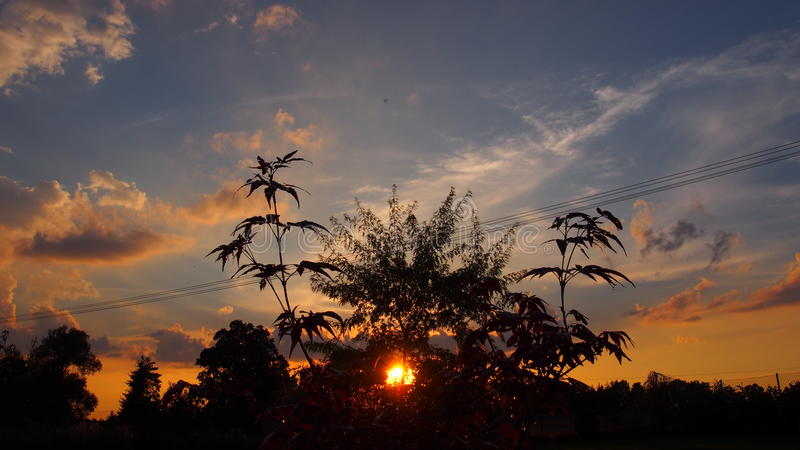 在树以后的日落 库存照片
