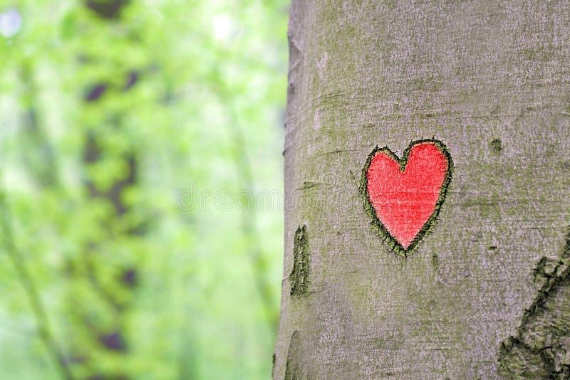 在树刻记的红色心脏 免版税库存图片