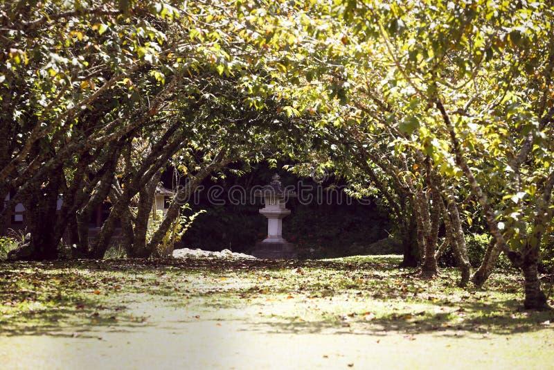 在树midle的路在budist寺庙的 库存照片