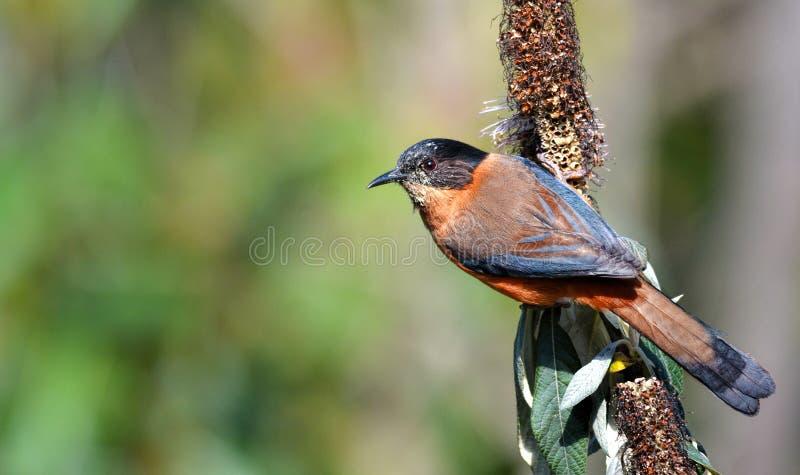 在栖息处的美丽的鸟 库存照片