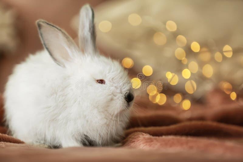在格子花呢披肩的逗人喜爱的蓬松兔子反对defocused光 免版税图库摄影