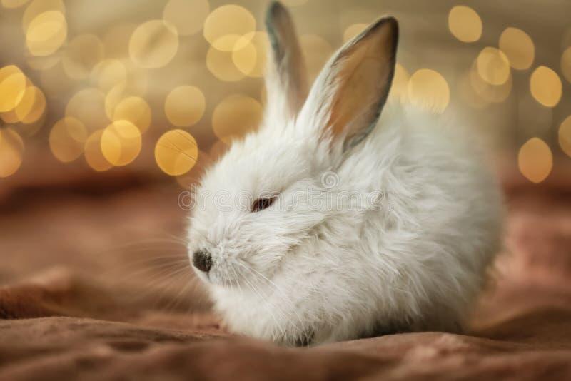 在格子花呢披肩的逗人喜爱的蓬松兔子反对defocused光 库存图片