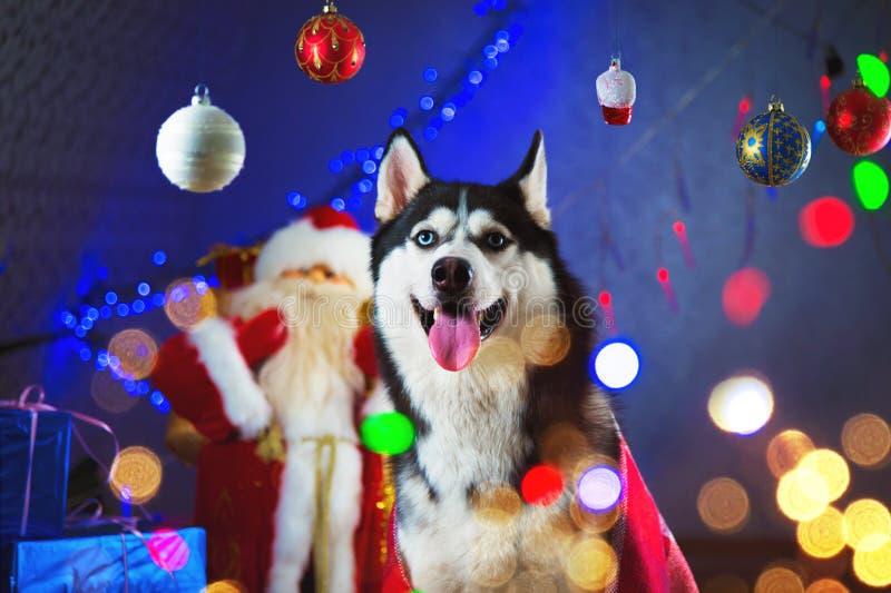 在格子花呢披肩红色毯子包裹的成人多壳的男性围拢由光和新年` s圣诞节玩具诗歌选- 库存照片