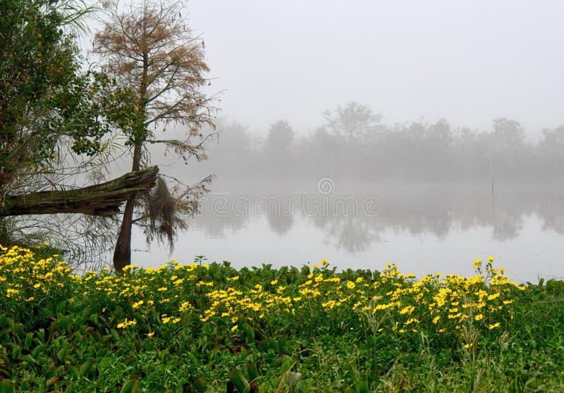 在格斯特海岛路易斯安那岸的明亮的黄色雏菊  免版税库存图片