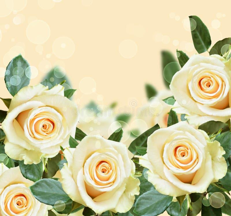 在桃子backround的玫瑰 免版税库存图片