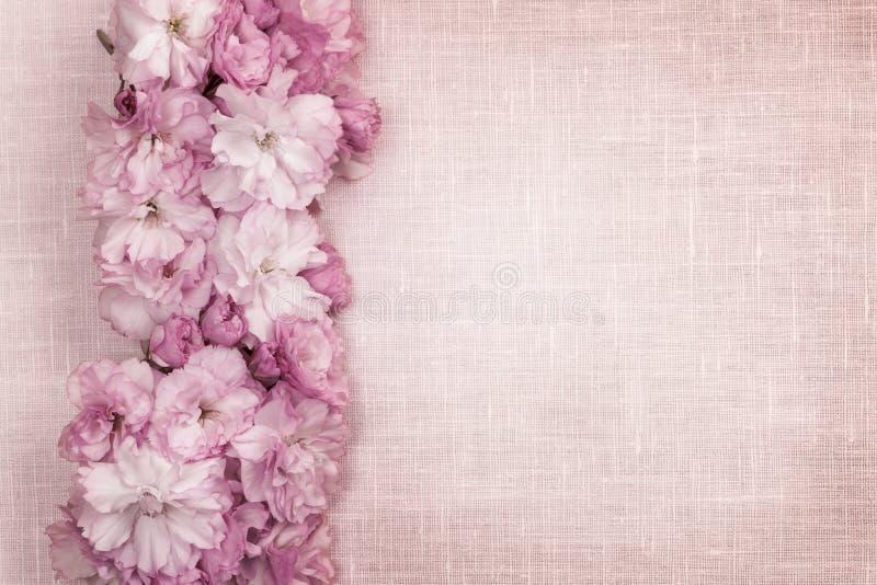 在桃红色亚麻布的樱花边界 库存图片