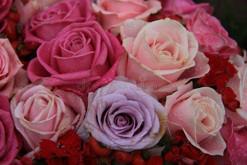 在桃红色和紫色的新娘玫瑰 免版税库存照片