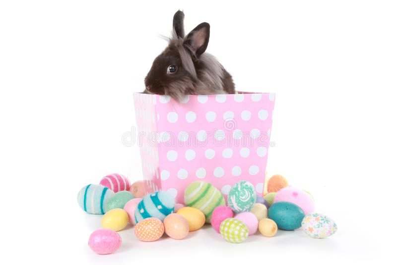 在桃红色圆点箱子的小兔 图库摄影
