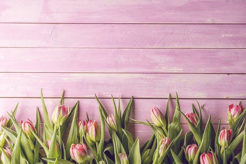 在桃红色木背景,复活节快乐,春天的桃红色郁金香 库存照片