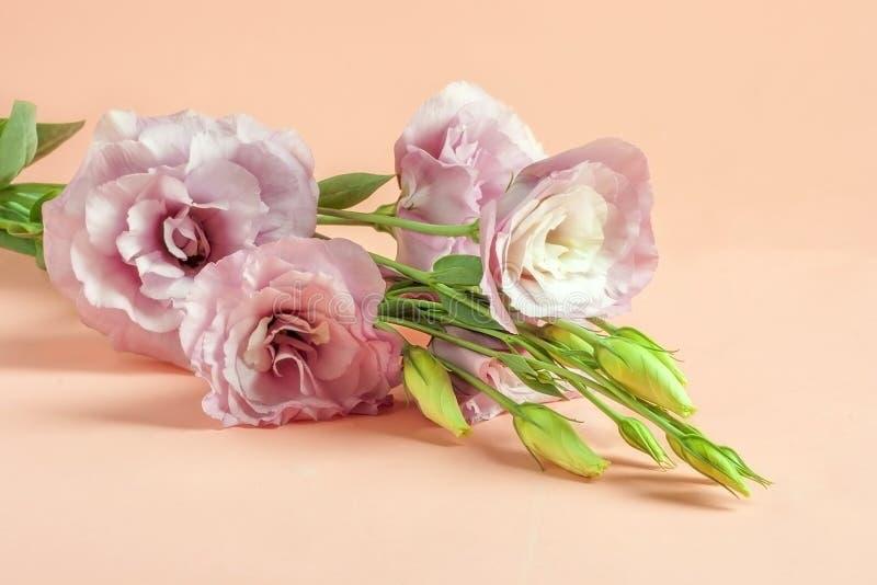 在桃红色淡色纸背景的精美桃红色南北美洲香草花 一朵最小的花的概念 免版税库存图片
