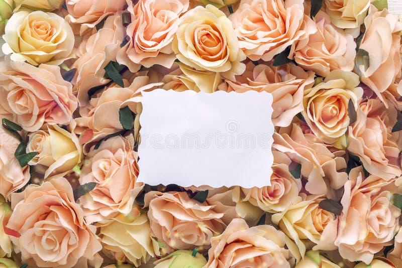 在桃红色玫瑰背景的白色空插件  库存图片