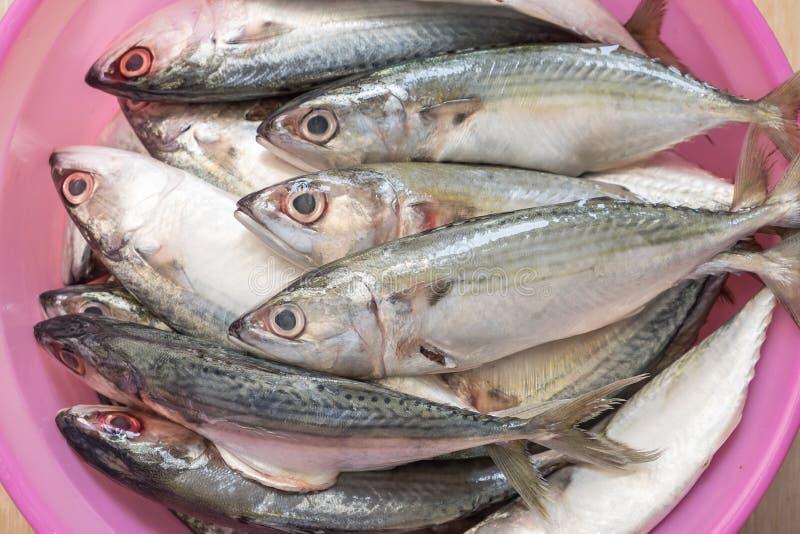 在桃红色碗的新鲜的海鱼 免版税库存照片