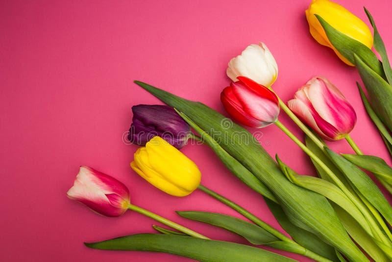 在桃红色背景的多彩多姿的郁金香 库存照片