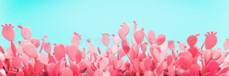 在桃红色背景的异常的蓝色仙人掌领域 免版税库存照片