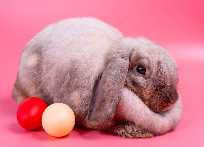在桃红色背景的灰色肥腻兔子用复活节题材的红色和乳脂状的鸡蛋 免版税库存图片