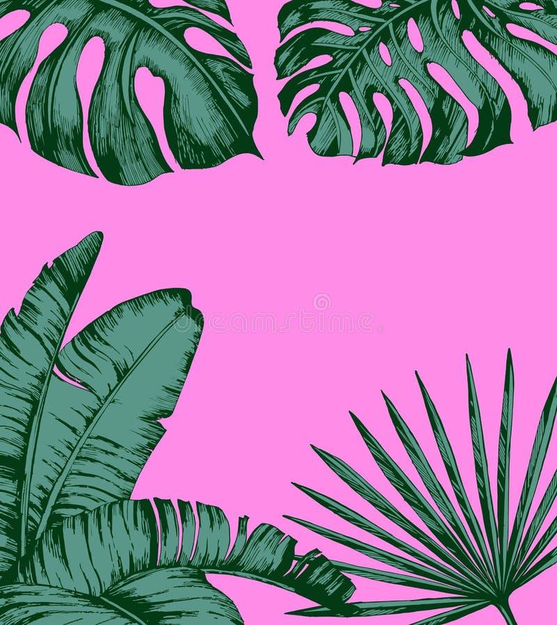 在桃红色背景的热带棕榈叶 最小的自然夏天概念 平的位置 时髦夏天热带叶子传染媒介 库存例证