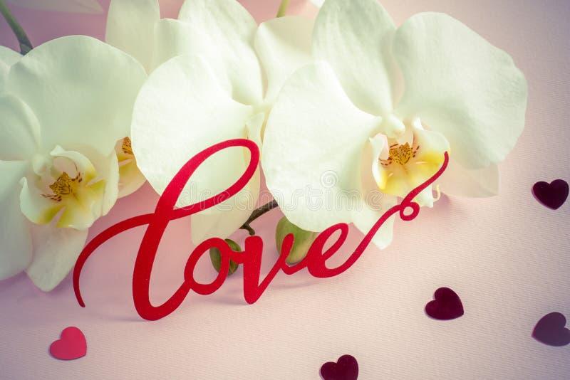 在桃红色背景的白色兰花题字爱 库存图片