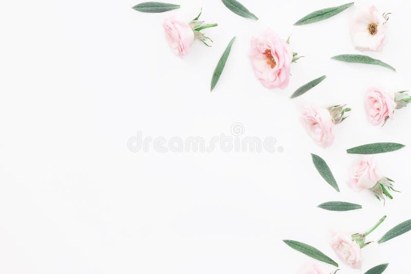 在桃红色背景的美好的桃红色玫瑰头 免版税库存照片