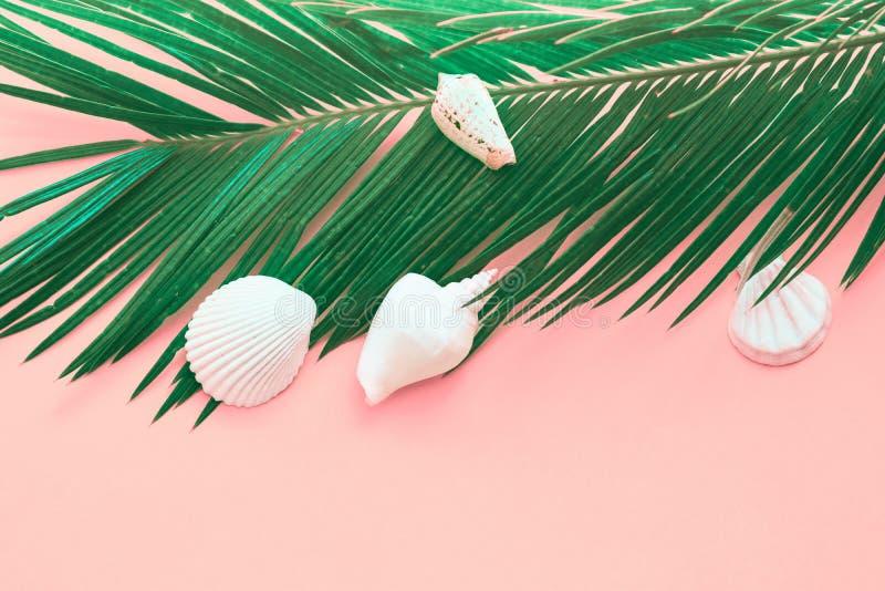 在桃红色背景的羽毛似绿色棕榈叶白海壳 夏天热带船舶创造性的概念 温泉的海报横幅 库存照片