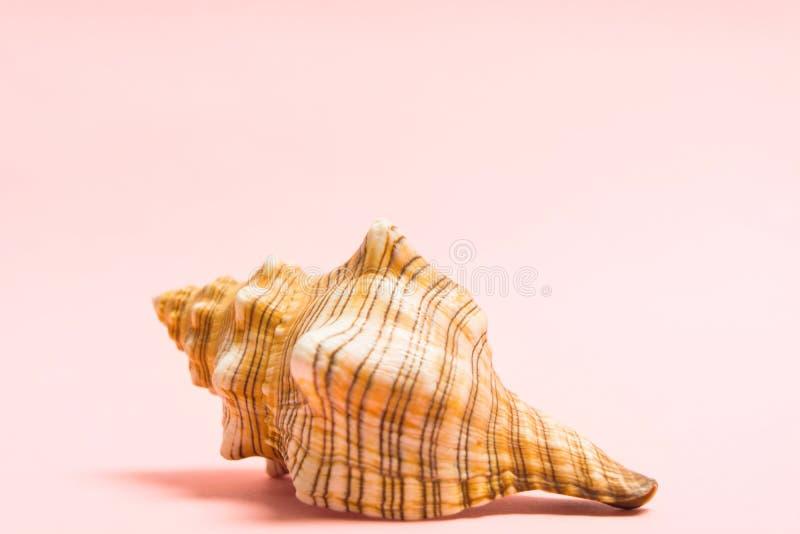 在桃红色背景的自然大海壳与拷贝空间 海洋纪念品 与seashella的夏天概念 库存图片