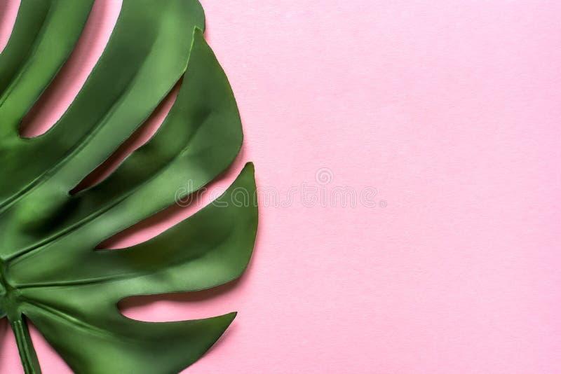 在桃红色背景的Monstera叶子 平的位置,顶视图 库存图片
