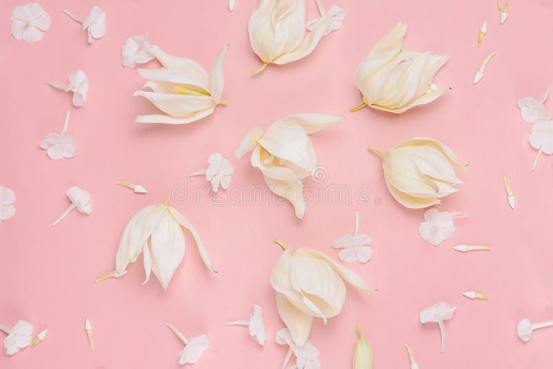 在桃红色背景,淡色口气的花卉构成 顶视图,平的位置 库存图片