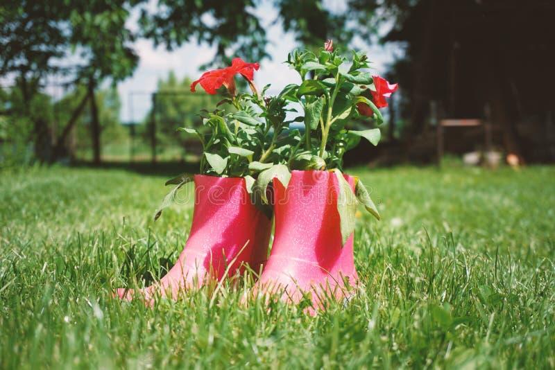 在桃红色胶靴的红色花在草,庭院的巧妙想法,装饰 库存图片