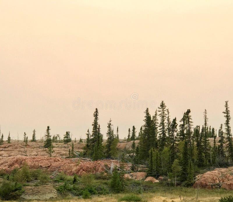 在桃红色花岗岩的常青树 图库摄影