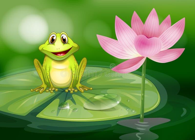 在桃红色花旁边的一只青蛙在池塘 向量例证
