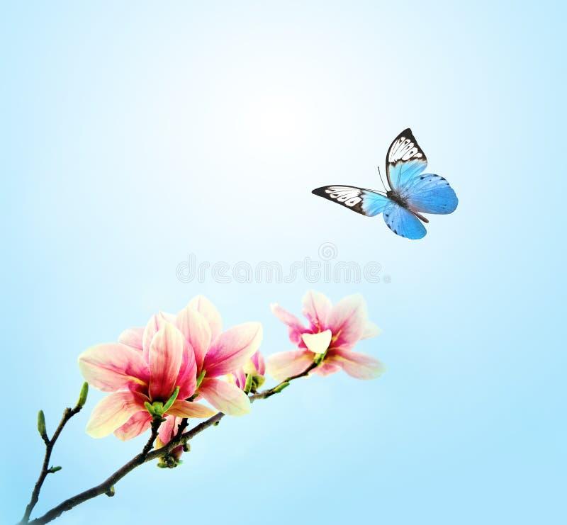 在桃红色花木兰,天空背景的美丽的蝴蝶 库存图片