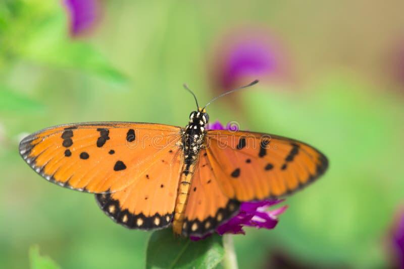 在桃红色花的蝴蝶与草 库存图片
