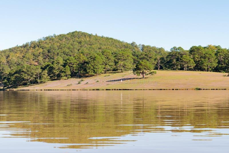 在桃红色草甸和露水的美好的阳光在日出第16部分的草 库存图片