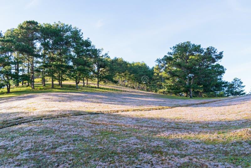 在桃红色草甸和露水的美好的阳光在日出第13部分的草 图库摄影