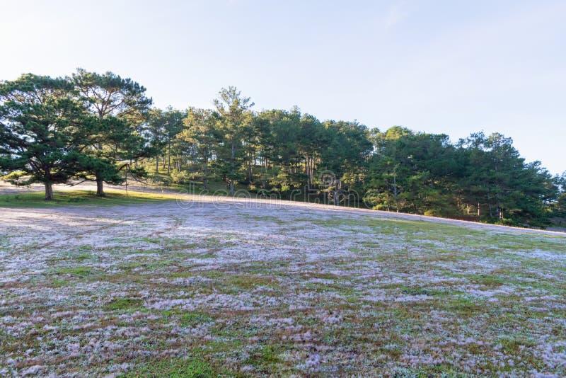 在桃红色草甸和露水的美好的阳光在日出第12部分的草 免版税库存照片