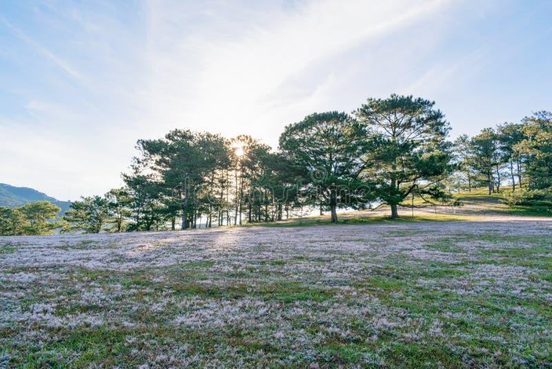 在桃红色草甸和露水的美好的阳光在日出第11部分的草 免版税库存照片