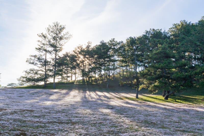 在桃红色草甸和露水的美好的阳光在日出第10部分的草 库存照片