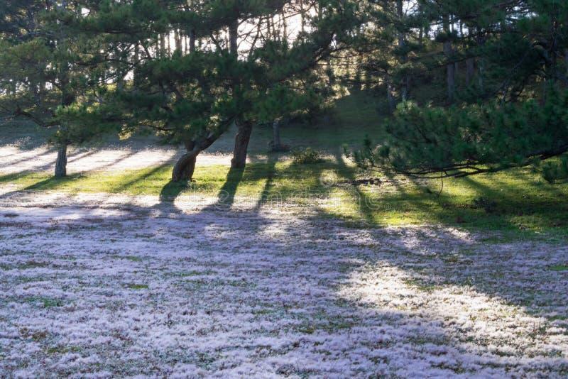 在桃红色草甸和露水的美好的阳光在日出第9部分的草 库存照片