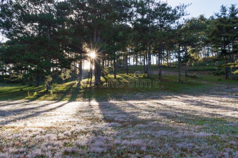 在桃红色草甸和露水的美好的阳光在日出第8部分的草 免版税库存图片