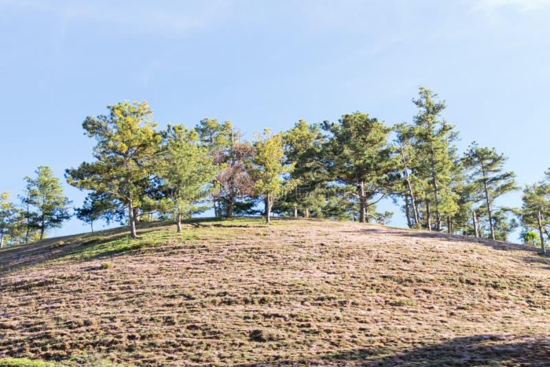 在桃红色草甸和露水的美好的阳光在日出第4部分的草 库存图片