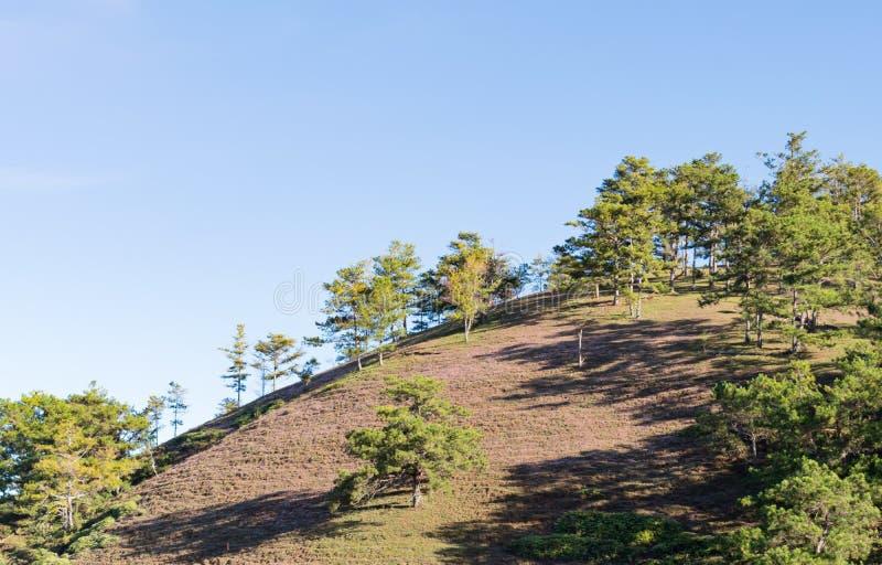 在桃红色草甸和露水的美好的阳光在日出第3部分的草 库存照片